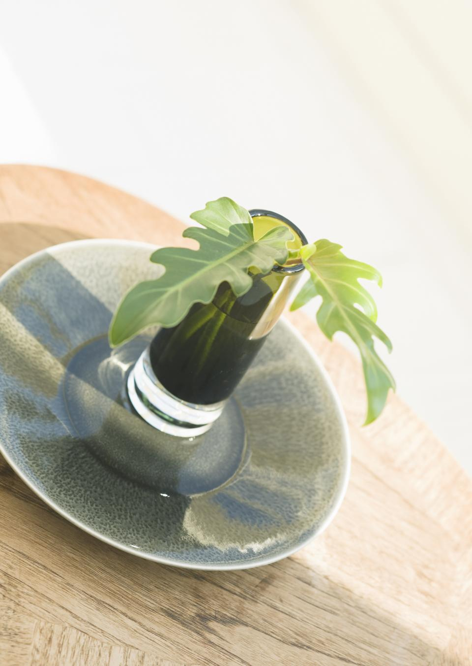 Indoor plant in water glass on
