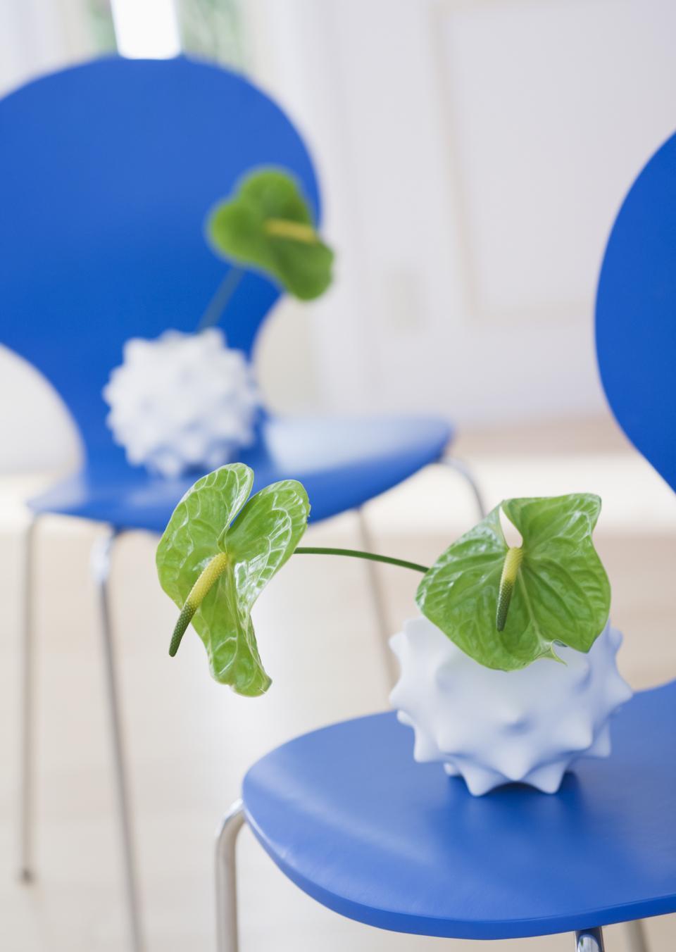 Anthurium vert sur chaise bleue