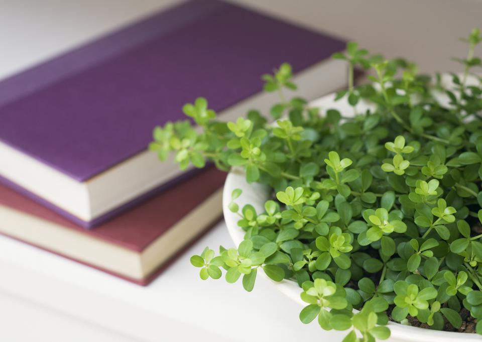 本と鍋で成長した葉と新鮮な緑の芽