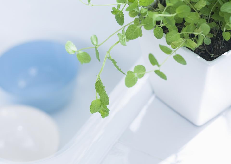 Close-up bathroom plant