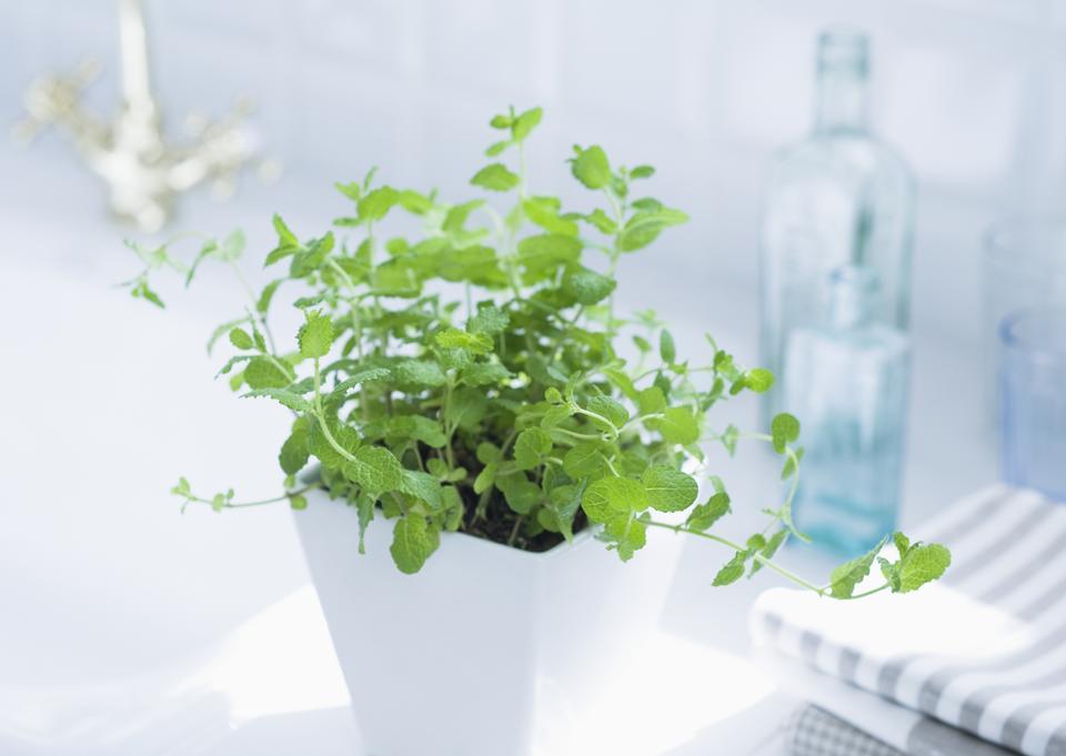 Plant pot at the bathroom