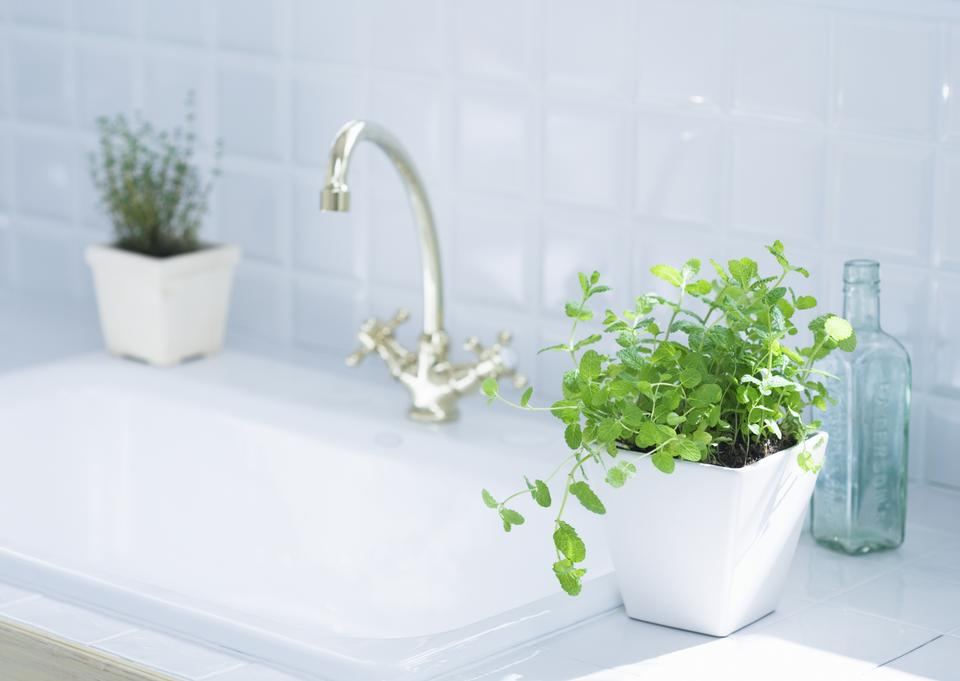 Green leaves pot at the bathroom