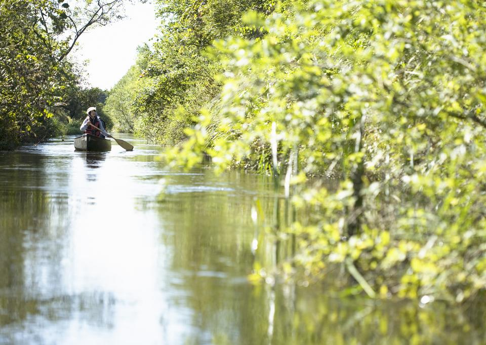 Woman paddling a boat carry tourist in the flooded forest