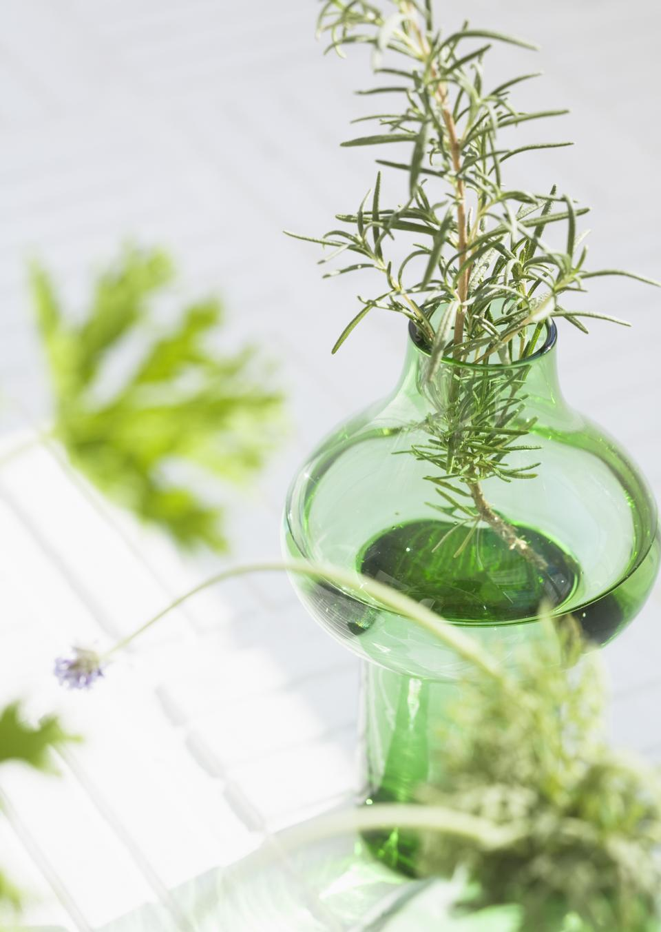 Fresh rosemary bound, and rosemary sprigs in a glass,