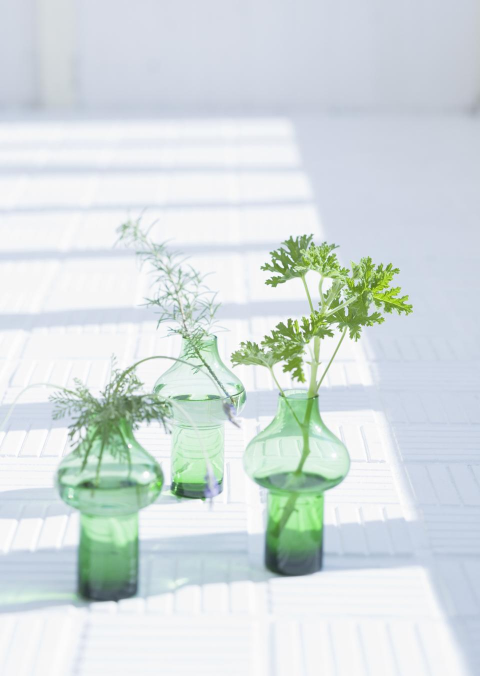 Three green herb leaves in glass under windows
