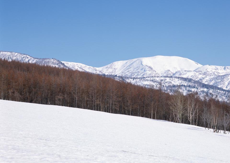冬季樹木在山上
