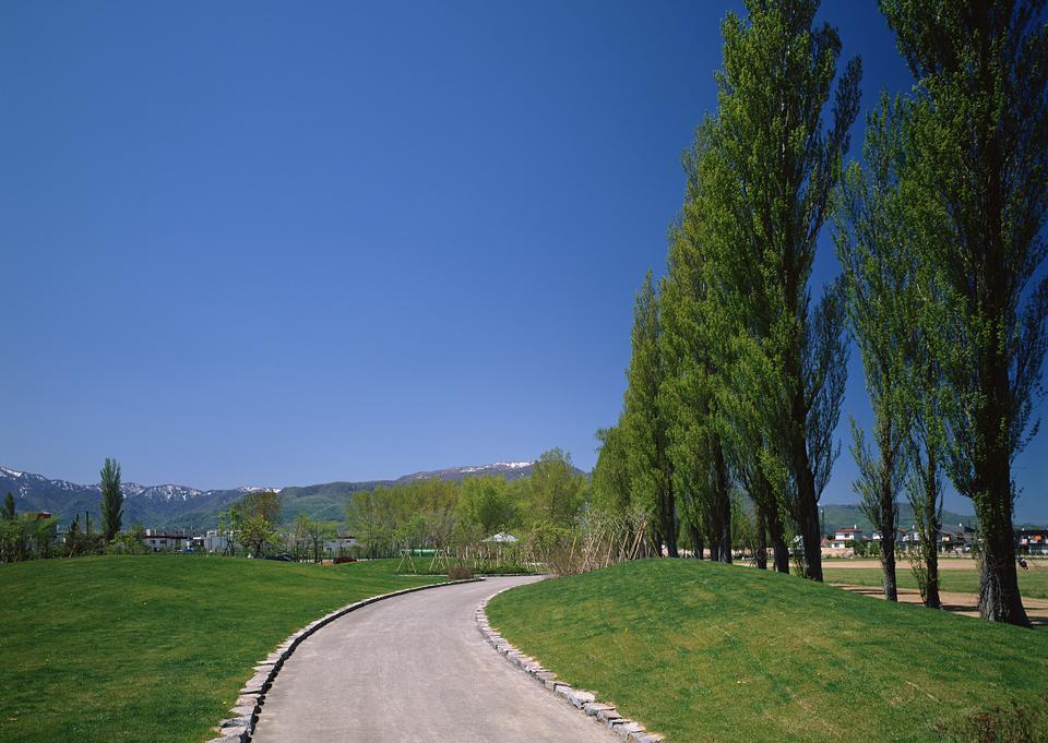 Route de campagne, les arbres verts