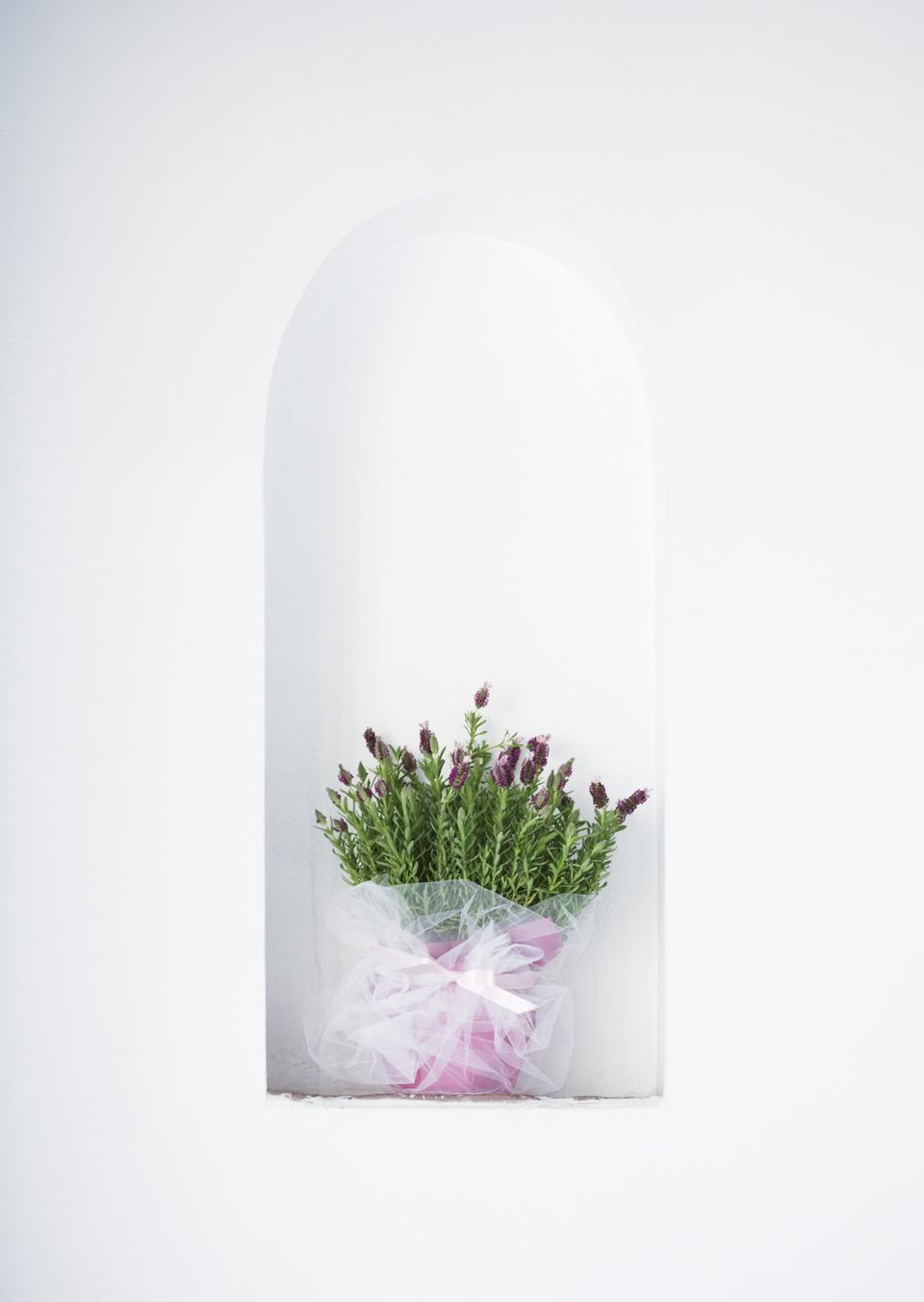 花薰衣草香草植物在心疼錫鍋