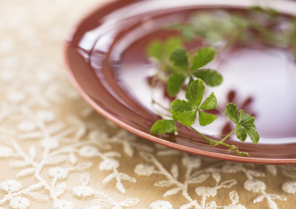 Close up dish on plant