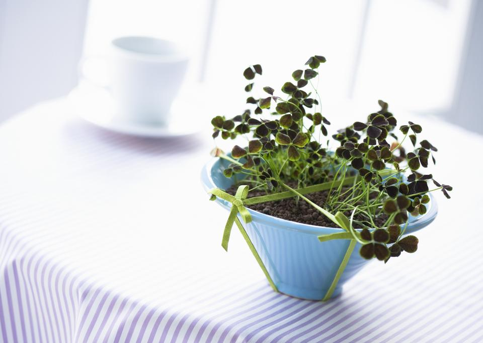 Indoor plant in vase on table