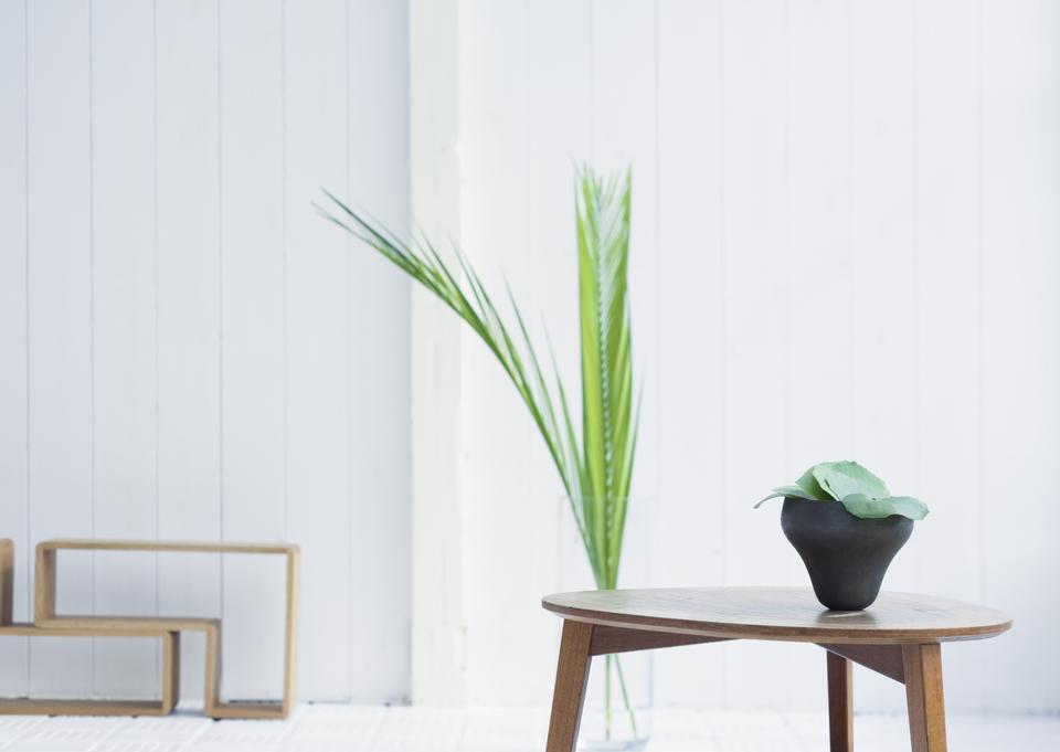 明亮的现代居室植物的详细信息