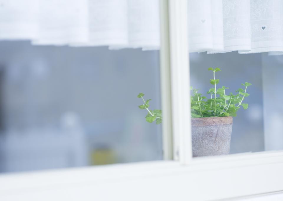 在一个锅里新鲜植物在一个旧的复古窗台