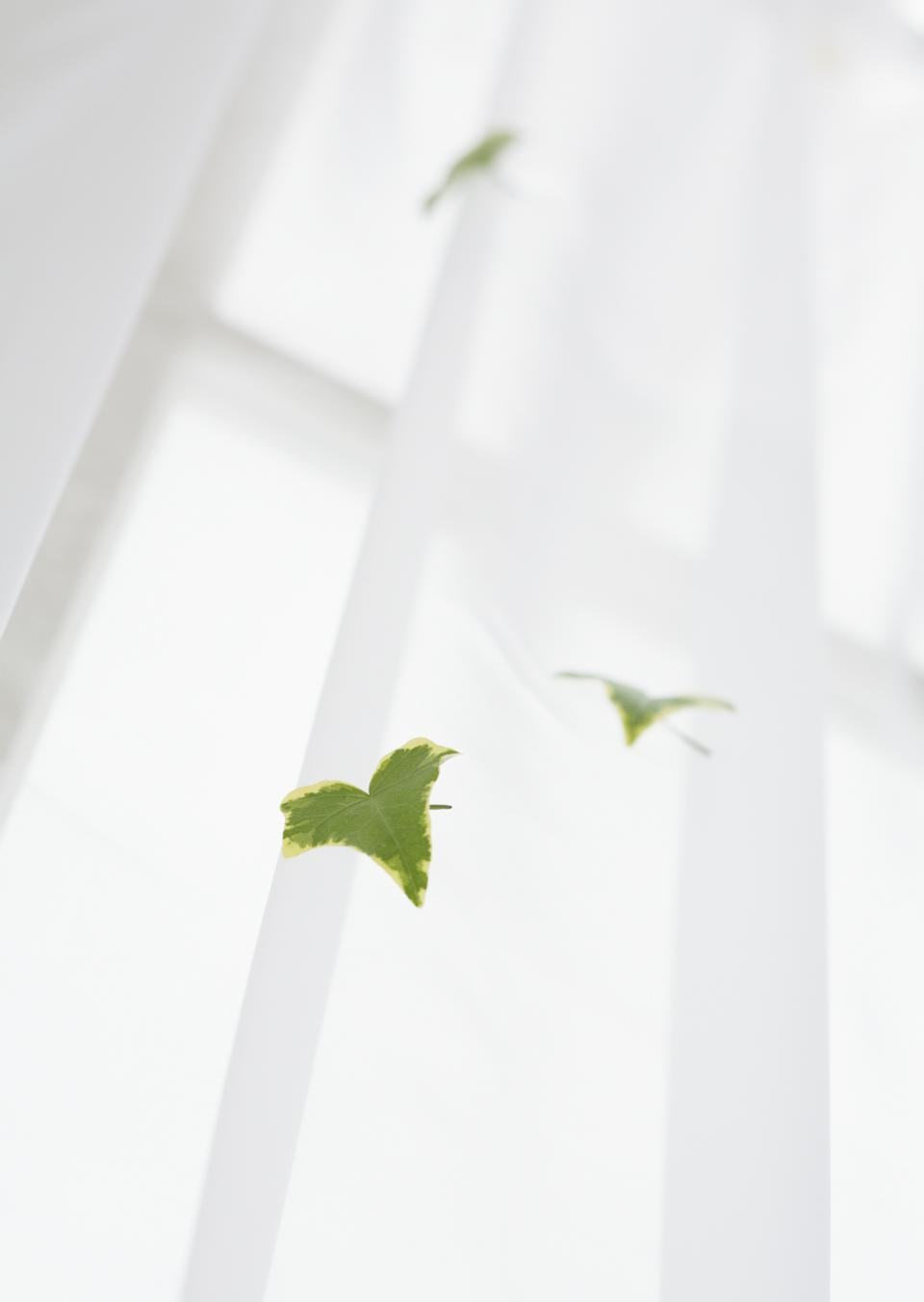 Ivy leaves on curtain