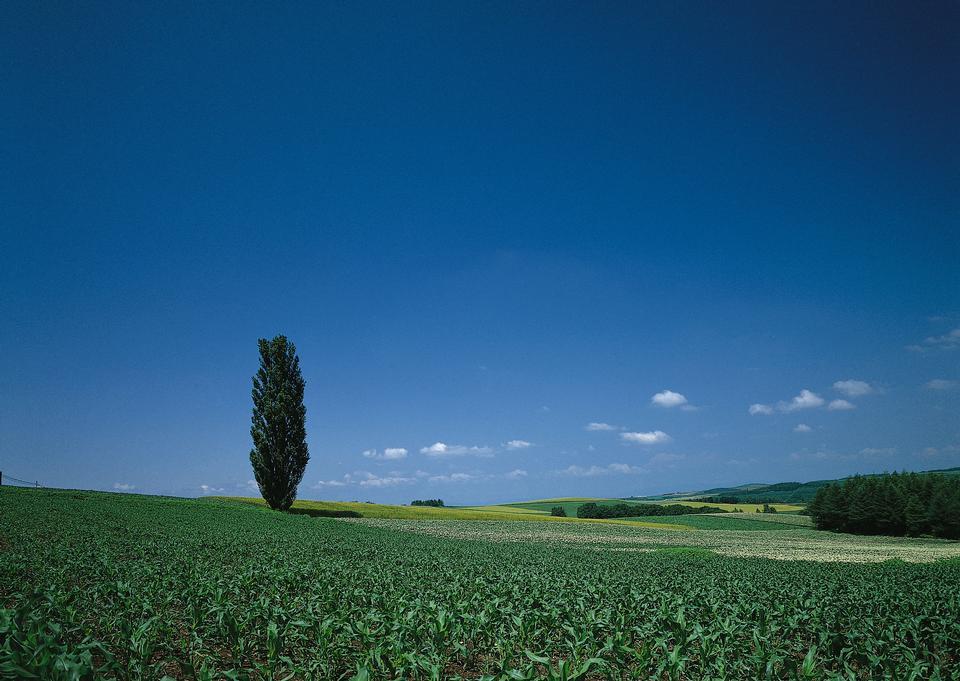 農地や牧草地