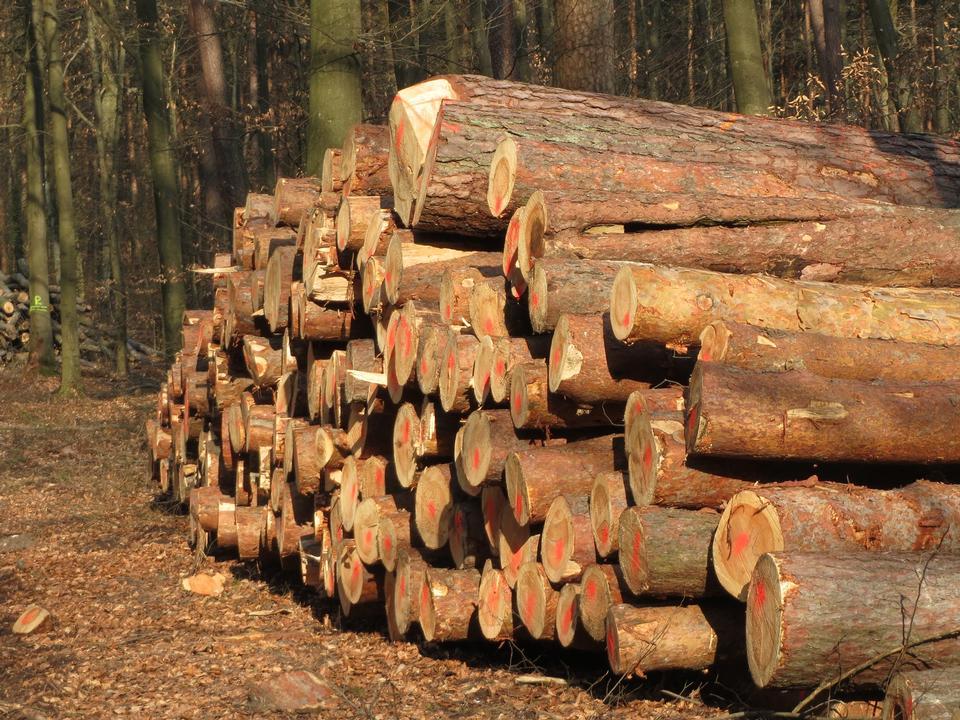 Rondins de bois de forêt sur fond