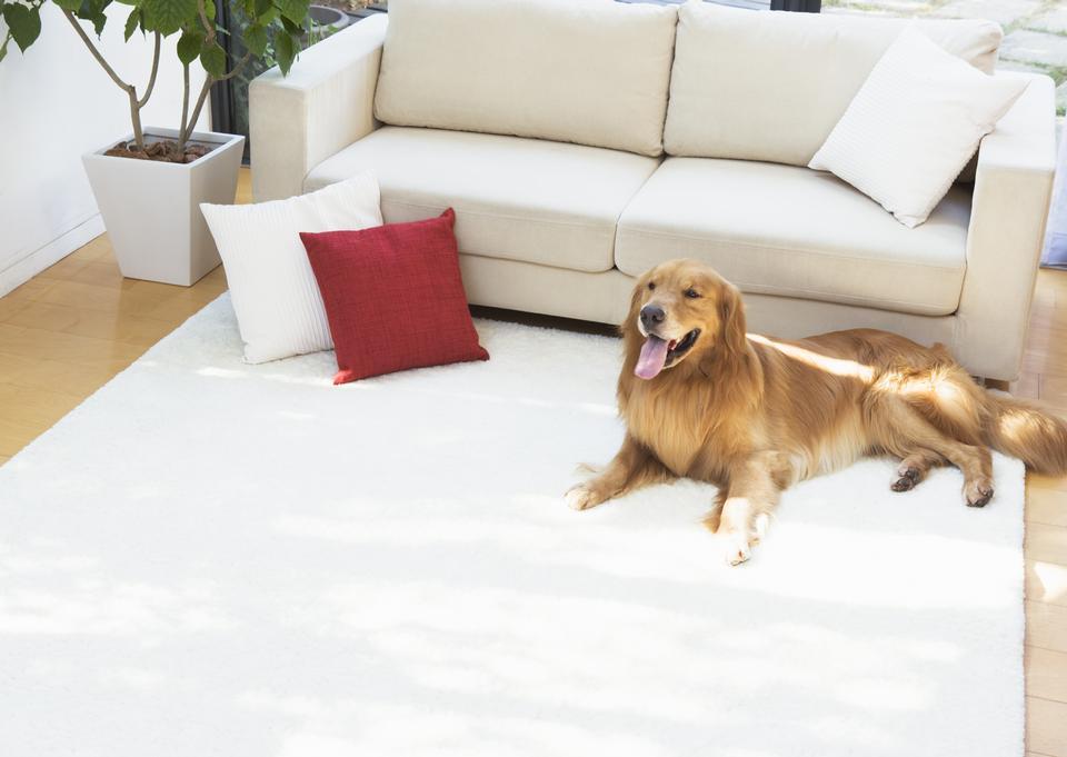 chien assis devant un canapé en cuir.