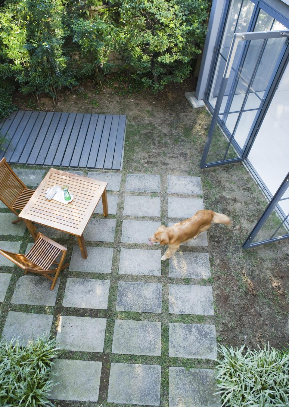 裏庭に若い救助子犬