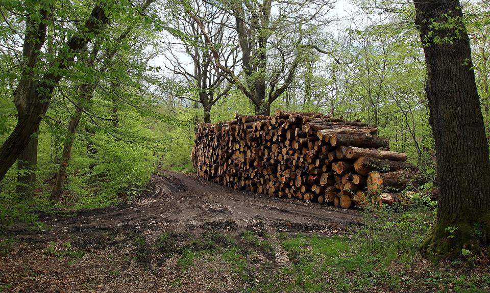 Pila de la madera por el camino en el bosque