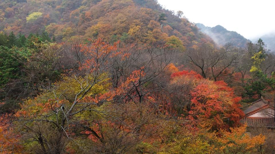 在韩国秋天的颜色