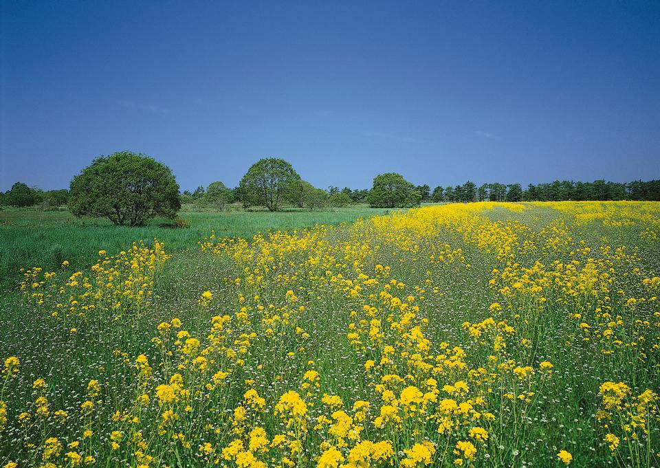 黄色の花と雲と青空