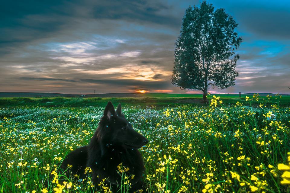 Labrador Retriever en la naturaleza