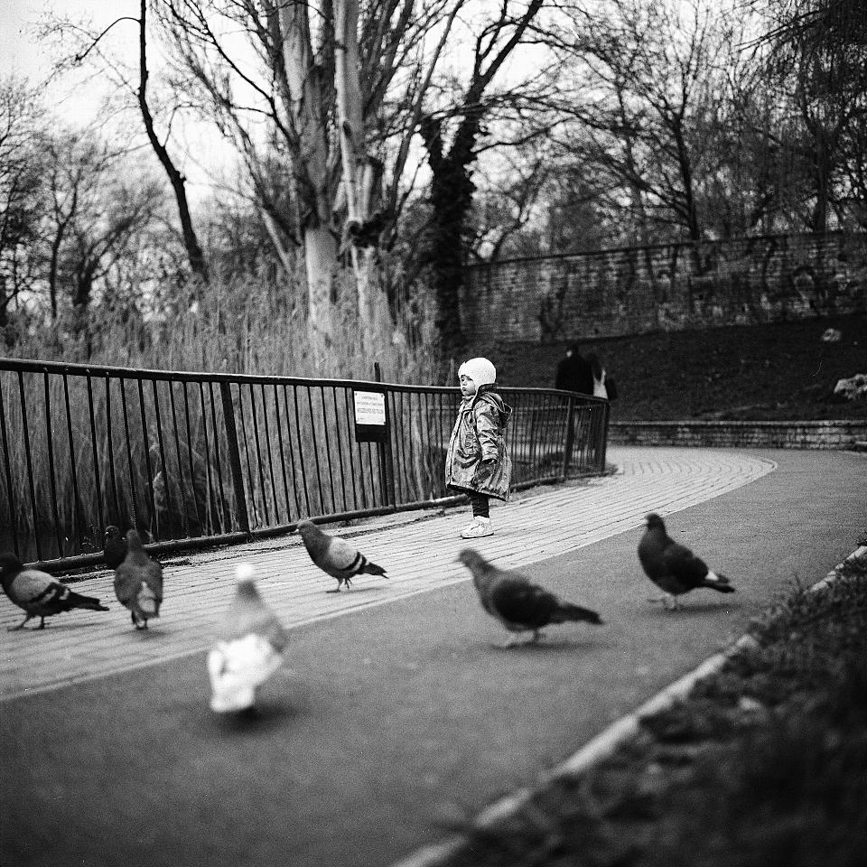 a little girl feeding a flock of pigeons
