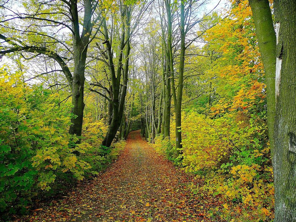 Camino en las afueras del bosque en otoño