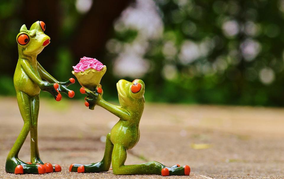青蛙,有嫁给我
