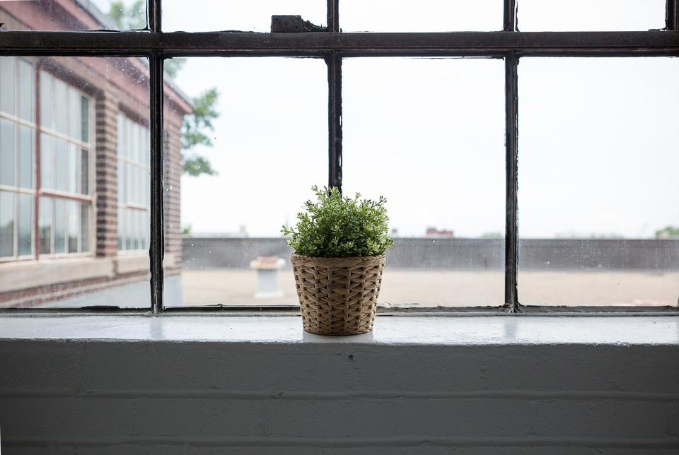 Fresh leaves in a green flower pot in front of a window.