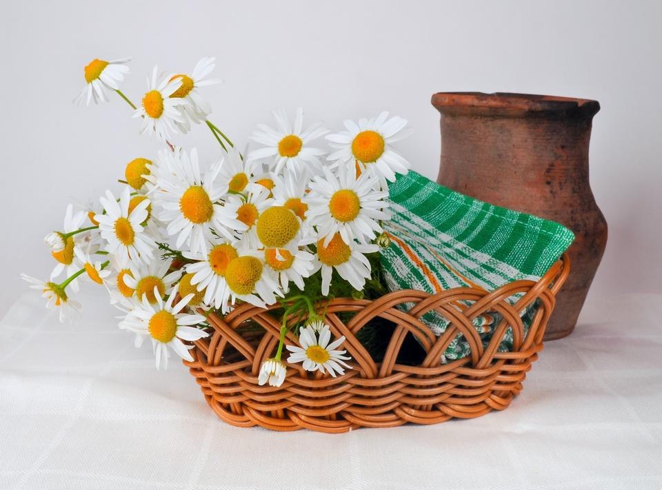 decoration with daisy flowers