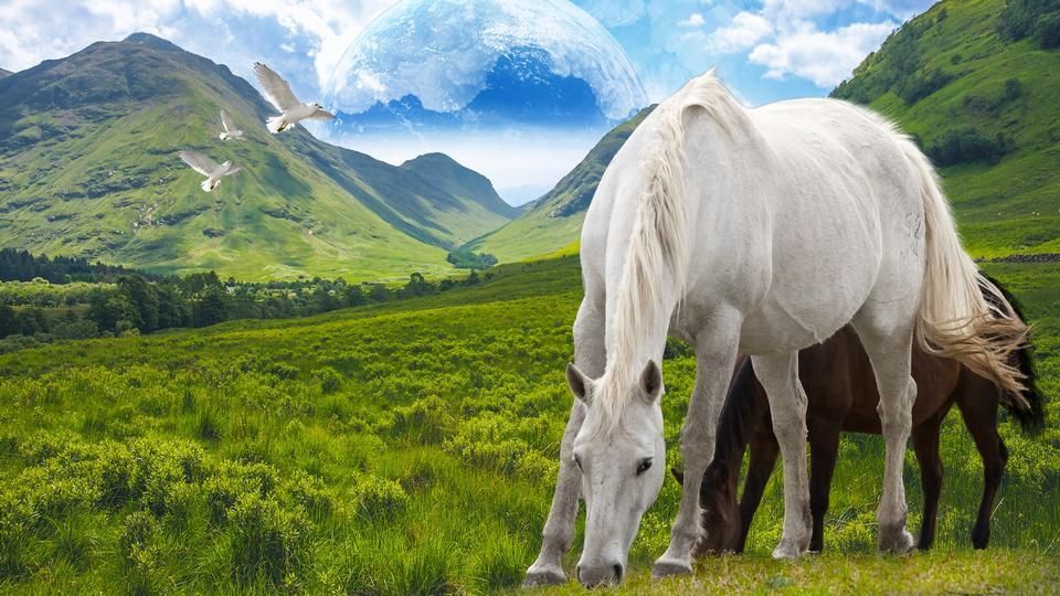 马在夏天山