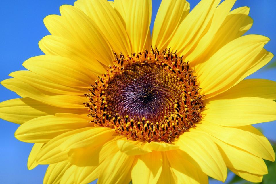 Beautiful landscape with sunflower