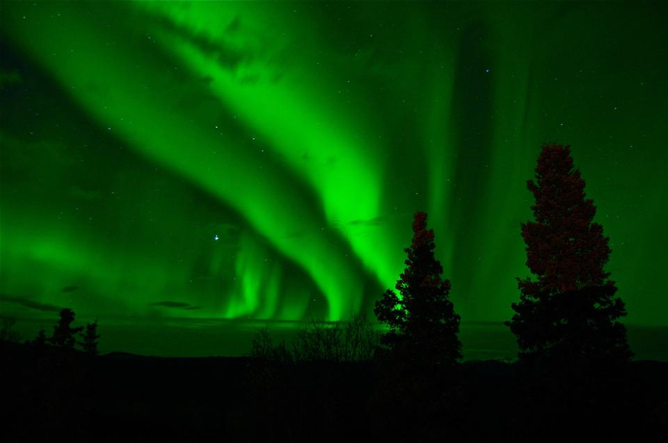 Luces del Norte (Aurora Borealis) por encima de un bosque