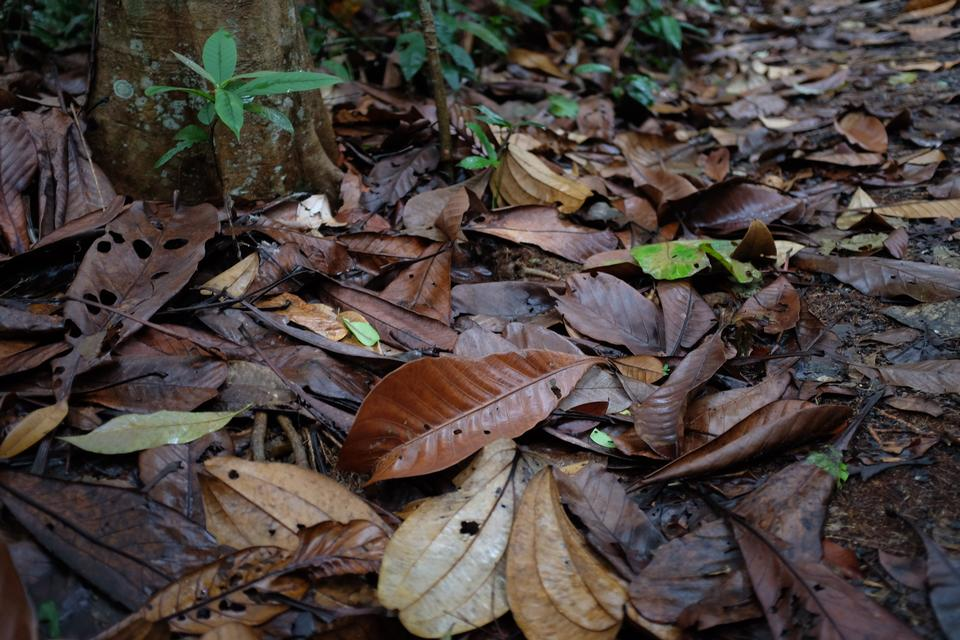 leaves on forest floor