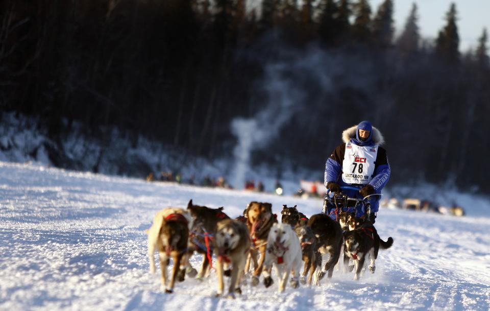 在雪橇在冬天雪雪橇狗比赛