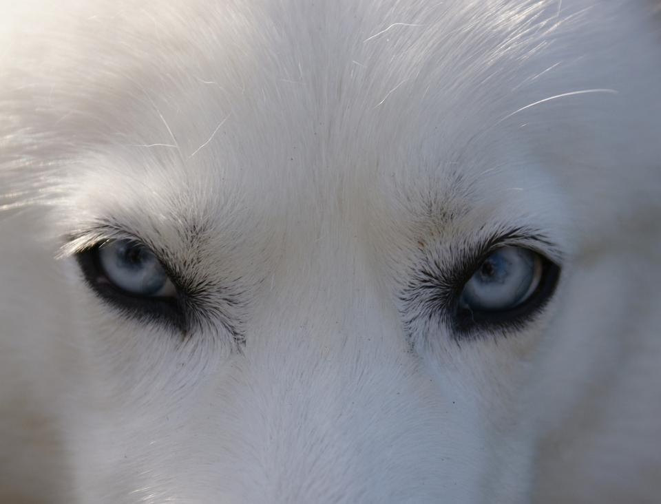 Close up a white dog