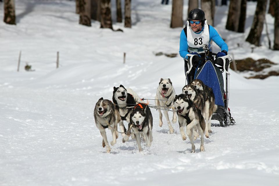 Huskysafari in Aktion.