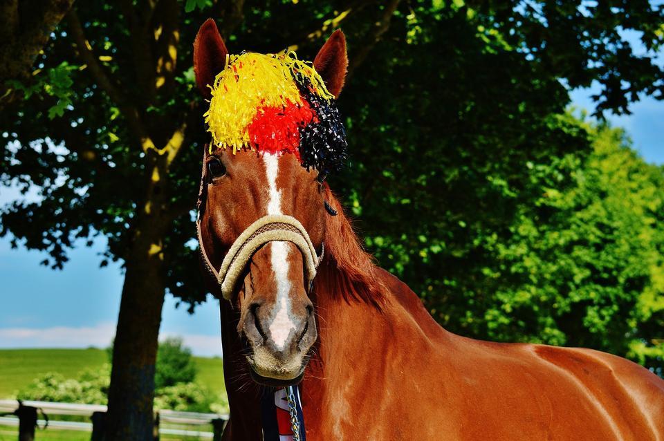 Germany Horse