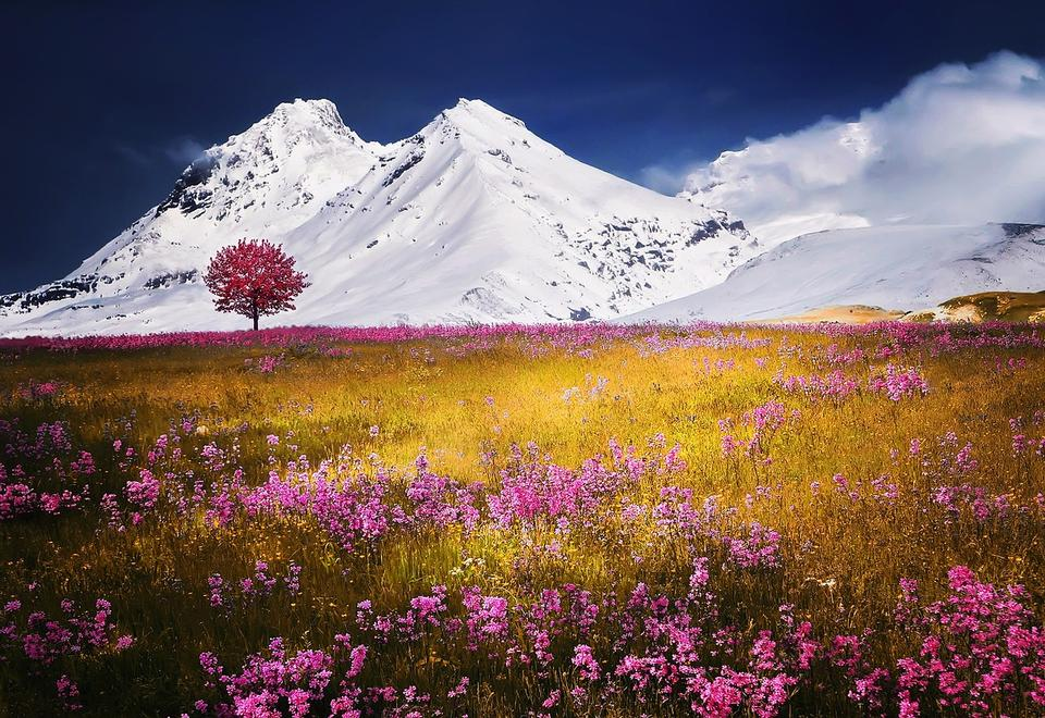 Alps Tree Snow Nature Landscape Flowers Grass