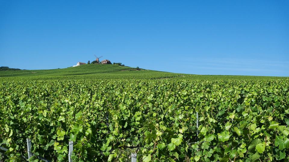 Reims Verzenay Champagne Grapes Fields Winery