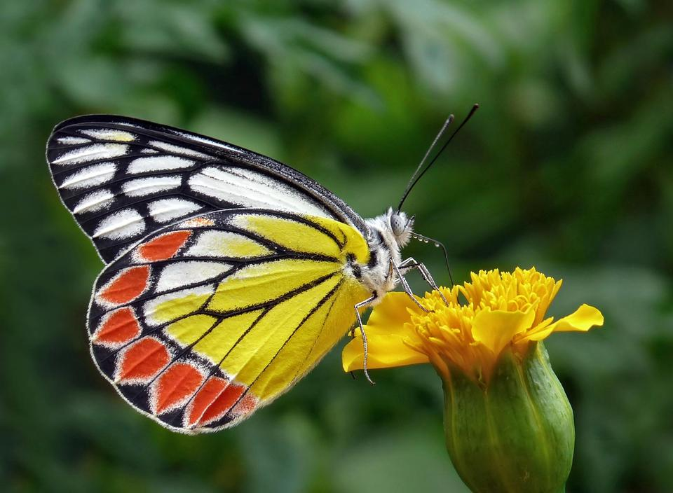 Closeup papillon sur fleur