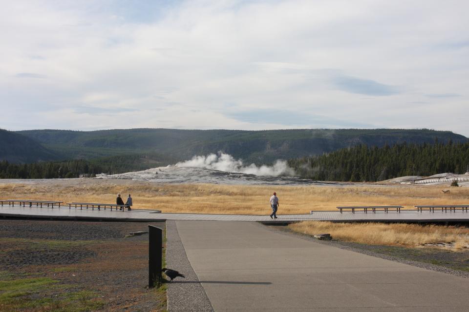 Beautiful geyser in yellowstone national park