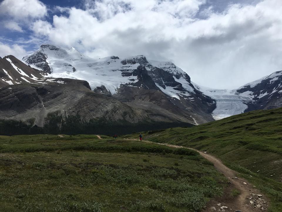 Mont Athabasca couvert de neige du sentier du col Wilcox
