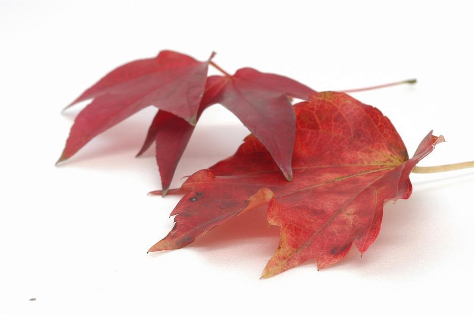 lindas folhas de outono coloridas