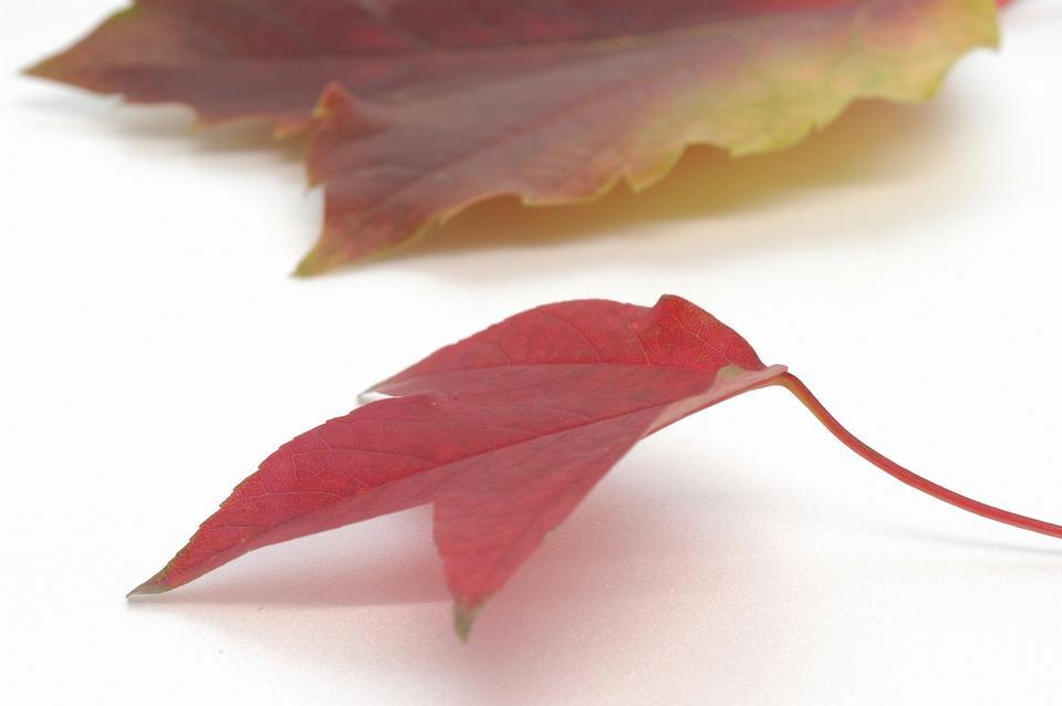 美丽的五颜六色的秋天的树叶