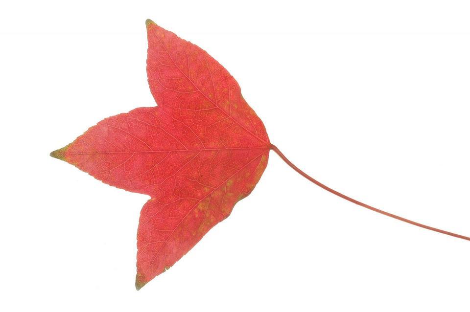 beautiful colorful autumn leaf