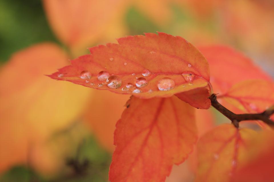 在叶子上的水滴