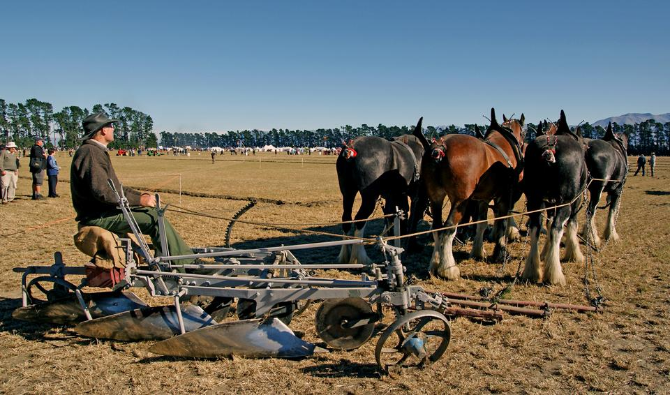 Working horses with a farm field