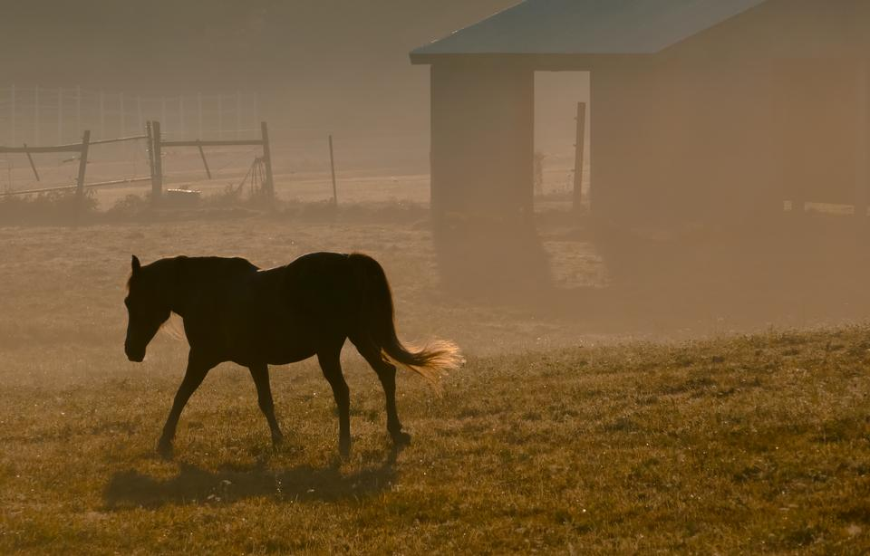 美しいアラビアの馬のシルエット