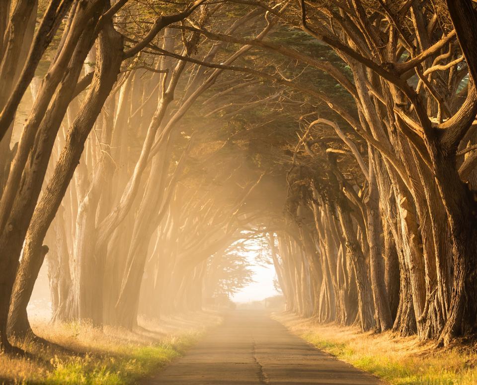 дерево природа солнце